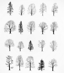 new-york-trees_thumb